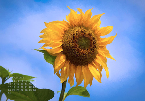 Sunflower(calendar) by Frank Damon